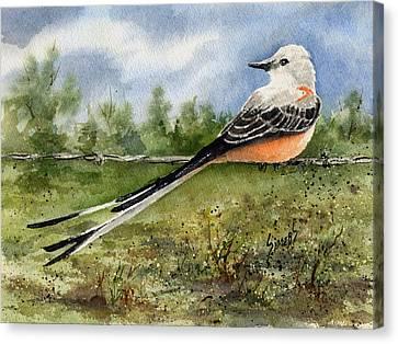 Scissor-tail Flycatcher Canvas Print by Sam Sidders