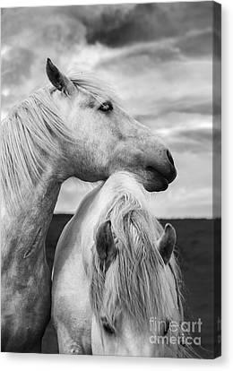 Scottish Horses Canvas Print by Diane Diederich