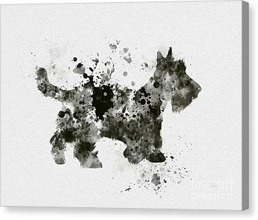 Scottish Terrier Canvas Print by Rebecca Jenkins