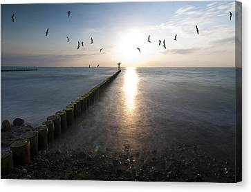 Sea Birds Sunset. Canvas Print by Nathan Wright