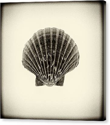 Sea Creatures, The Shell #12 Canvas Print by Valentin Gladyshev