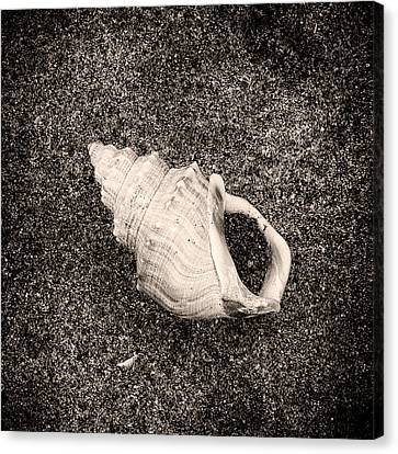 Sea Creatures, The Shell #8 Sepia Canvas Print by Valentin Gladyshev