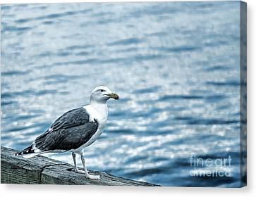 Sea Gull II Canvas Print by Tamyra Ayles