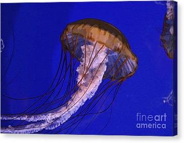 Sea Jelly Canvas Print by Jeanette French