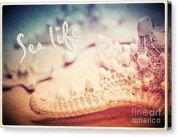 Sea Life Canvas Print by Angela Doelling AD DESIGN Photo and PhotoArt