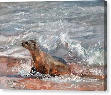 Sea Lion Canvas Print by David Stribbling