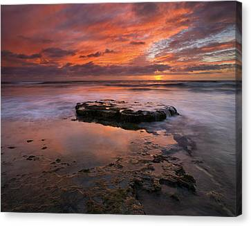 Sea Of Red Canvas Print by Mike  Dawson