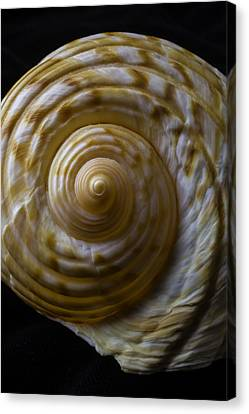 Sea Shell Beauty Canvas Print by Garry Gay
