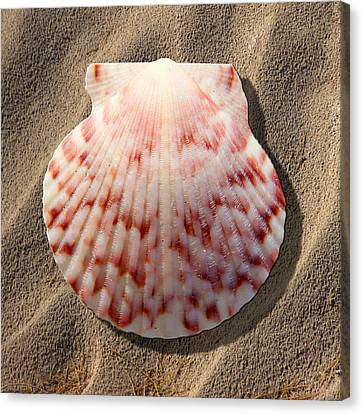 Sea Shell Canvas Print by Mike McGlothlen