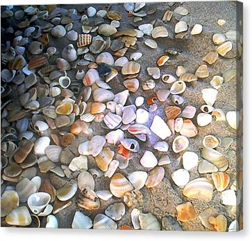 Sea Shells Canvas Print by Evelyn Patrick