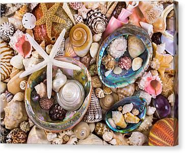 Sea Shells Canvas Print by Jim Hughes