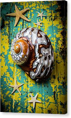 Sea Snail Shell With Stars Canvas Print by Garry Gay