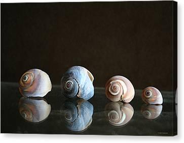 Sea Snails Canvas Print by Linda Sannuti