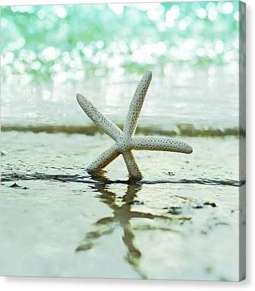 Sea Star Canvas Print by Laura Fasulo
