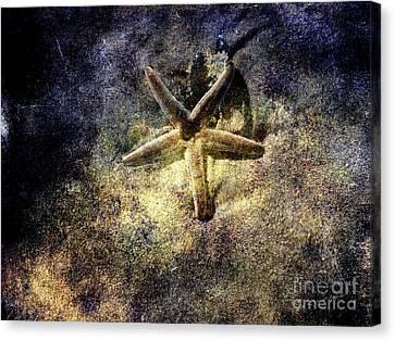 Sea Star Canvas Print by Susanne Van Hulst