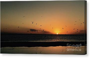 Seabirds At Sunset Canvas Print by Judee Stalmack