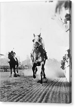 Seabiscuit Acrossing The Finish Line Canvas Print by Everett
