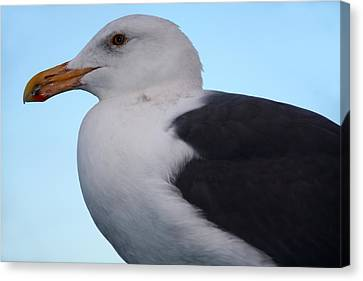 Seagull Canvas Print by Aidan Moran
