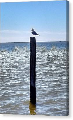 Seagull Canvas Print by Bruce Lennon