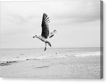 Seagull Canvas Print by Fine Arts