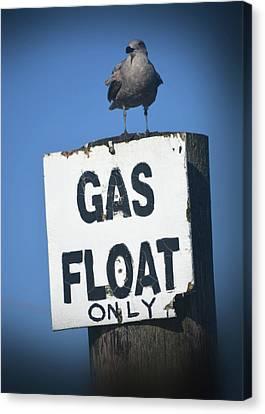 Seagull Float Canvas Print by Sonja Bratz