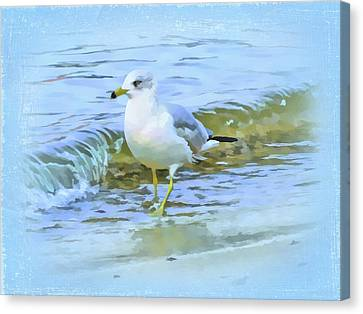 Seagull Canvas Print by Nina Bradica