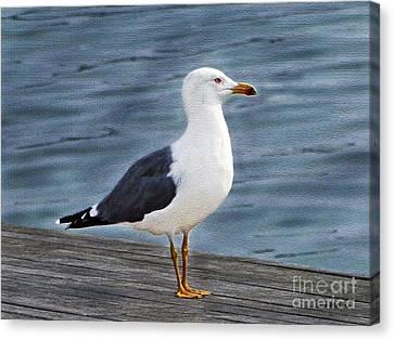 Seagull Portrait Canvas Print by Sue Melvin