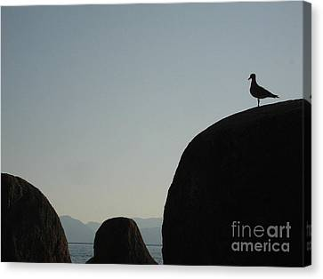 Seagull Silhouette Canvas Print by Silvie Kendall