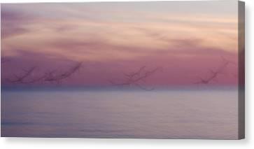 Seagulls In Motion Canvas Print by Adam Romanowicz