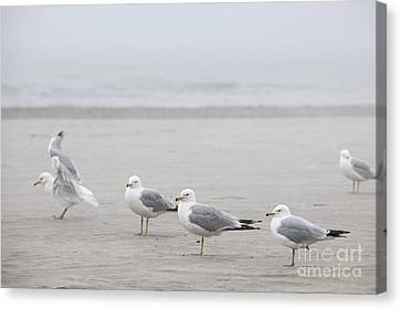 Seagulls On Foggy Beach Canvas Print by Elena Elisseeva
