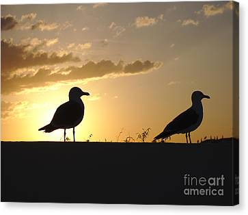 Seagulls Waiting For Sunset Canvas Print by Angelo DeVal
