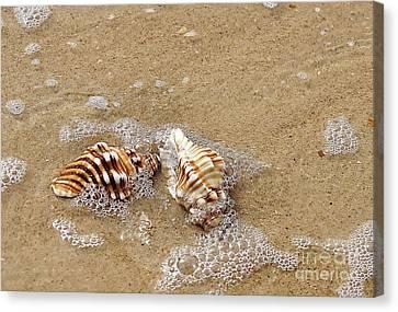Seashells And Bubbles 2 Canvas Print by Kaye Menner