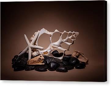 Seashells On The Rocks Canvas Print by Tom Mc Nemar