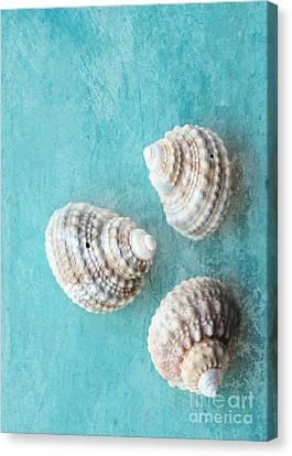 Seashells On Turquoise Canvas Print by Carol Groenen