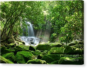 Secret Paradise - Hidden Appalachian Waterfall Canvas Print by Matt Tilghman