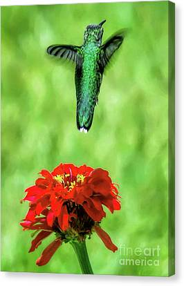 See Ya Later Canvas Print by Sue Melvin