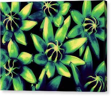 Seed Pods Canvas Print by Ranjini Kandasamy