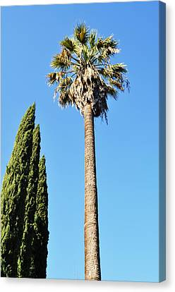 Seeking Beverly Hills Representation Canvas Print by Todd Sherlock