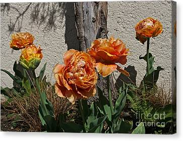 Sensual Touch Tulips Canvas Print by Byron Varvarigos