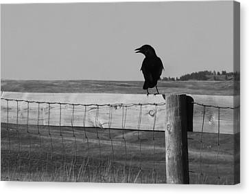 Sentinel Canvas Print by Harold Clayberg