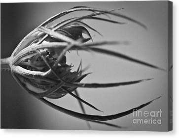 Sepal Structure Canvas Print by Ryan Kelly