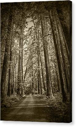 Sepia Tone Of A Rain Forest Dirt Road Canvas Print by Randall Nyhof