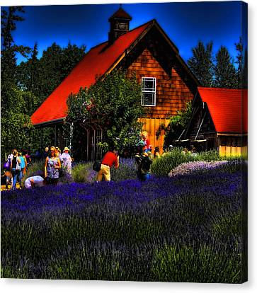 Sequim Lavender Canvas Print by David Patterson