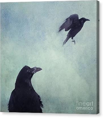 Set Your Mind Free Canvas Print by Priska Wettstein