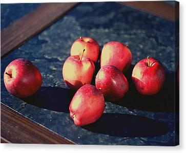 Seven Apples Canvas Print by Susie DeZarn