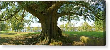 Shade Tree 2 Panoramic Canvas Print by Mike McGlothlen
