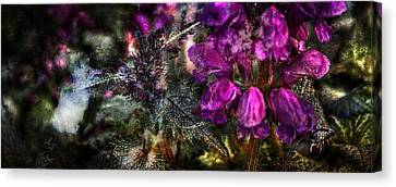 Shades Of Purple  Canvas Print by Thom Zehrfeld