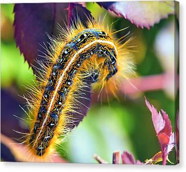 Shagerpillar Canvas Print by Bill Tiepelman