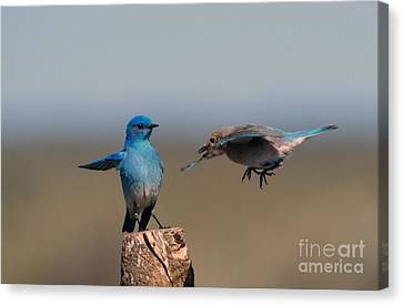 Share My Post Canvas Print by Mike Dawson