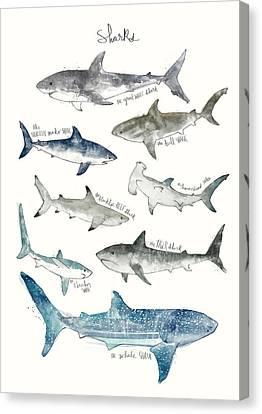 Sharks Canvas Print by Amy Hamilton